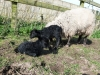 smali-flock-2012-10