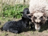smali-flock-2012-11