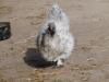 smali-flock-2012-19
