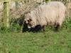 smali-flock-2012-2