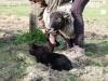 smali-flock-2012-23