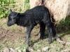 smali-flock-2012-7