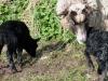 smali-flock-2012-9