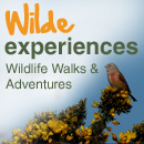 Wildlife Experiences | Wilde Ecology
