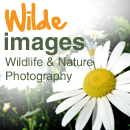Post image for Wilde Images
