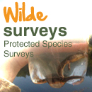 Protected Species Surveys | Wilde Ecology